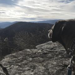 Vansage.com authors dog gaze National parks where dogs are allowed